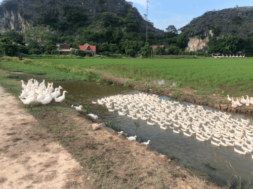 Ninh binh-Trang an risaie vietnam oche