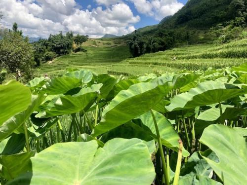 sapa sa pa vietnam risaie trekking 8